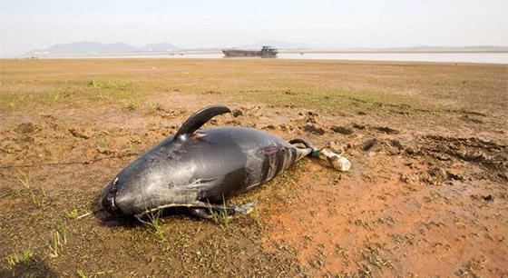 鄱阳湖湖洲上发现一死亡长江江豚