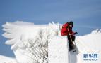 哈尔滨国际雪雕赛开铲