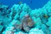 神奇!实拍夏威夷章鱼变色变态防御过程