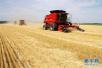 山东调整小麦种植保险政策 每亩保费由15元提至18元