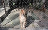 全世界动物园最后一只华南金猫在杭州走了 它的同伴已近十年踪迹难觅