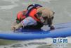 狗年科普问狗西东:狗从哪里来?狗为何会肥胖?