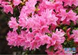 北京今预计40万人游园 创历年春节假期同时点新高