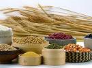 哈市7家粮油企业入选国家粮食局重点支持名单
