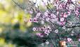 郑州气温今降明升 游园赏花看好天气再出门