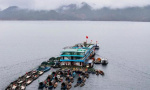 """杭州千岛湖""""巨网捕鱼""""开春第一网收获5万斤,每条都有20斤左右"""