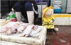 越南小猫看守海鲜摊