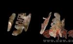 出土两千年古酒的秦国古墓又有更大惊喜:发现罕见战国卜甲 墓主或为巫师