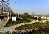 驻马店市西平县千里廊道生态绿化成新景
