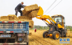 河北永清:小麦丰收 秸秆变宝