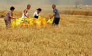 2018年河南小麦生产