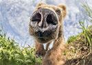 大熊拍大头照笑死人