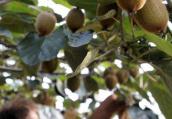 """全国农产品产销对接行首场活动结束 河南""""土特产""""受欢迎"""