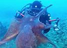 海底偶遇大章鱼
