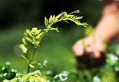 南京林木覆盖率已达31.02% 树种更趋多样化