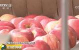 苹果价格大涨创五年高位、贸易商压货惜售 为啥这么火?