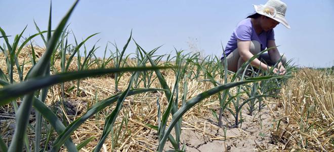 山东部分地区加紧抗旱保苗