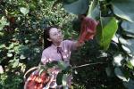 河北文安生态采摘为绿色发展添活力