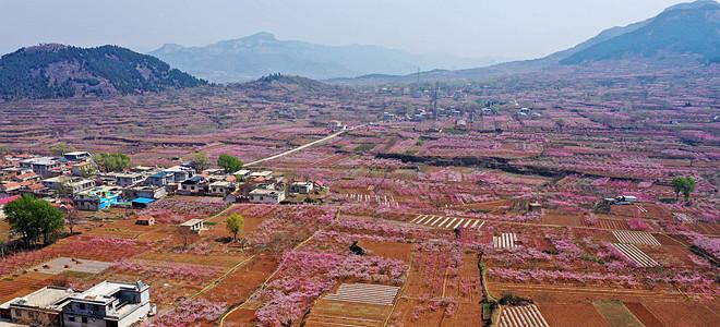 山东济南:万亩桃花笑春风
