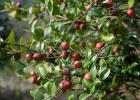 """河南新縣:30余萬畝油茶成農民致富的""""搖錢樹"""""""