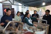 河南省林业局调研组到鲁山县调研林蚕菌产业发展情况