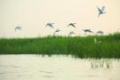 吉林白山原麝自然保护区被通报 人类活动影响剧烈