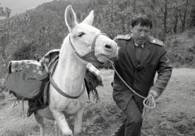 一个人,一匹马,一段传奇