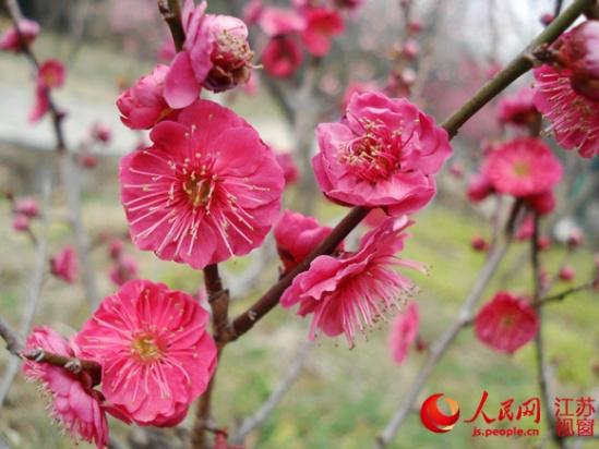 世界上最稀有的花