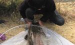 西山水库60斤大鲶鱼已放生:曾有人想买来吃肉