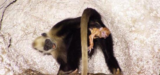 中国奇异动物图片