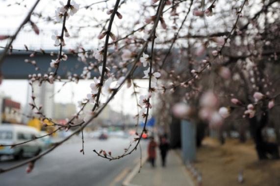 又到一年三月春 正是踏青赏花好季节(图)