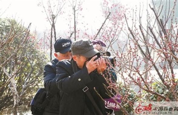 徐州龟山探梅园梅花相继盛开 吸引大量市民前来赏梅