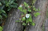 岩縫裏盛開的小花