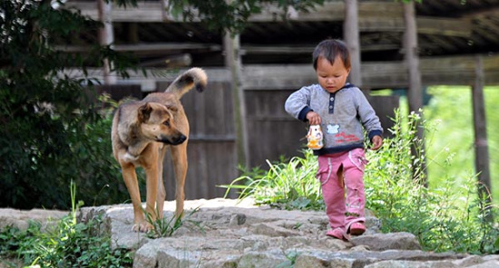 人患狂犬病必死?WHO呼吁为犬类打疫苗