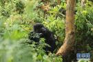 通讯:非洲火山下的野保接力