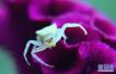 最新发现与创新 亿年琥珀封存蜘蛛竟有长尾巴