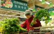 郑州:春节储备菜投放市场