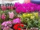 逛南京花市 把最美的季节带回家