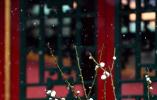 紫禁城的初雪 故宫春雪满空来