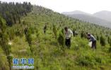 山东今年将完成造林150万亩 力争再建50个森林乡镇