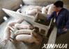 山东:猪价继续下行探底 育肥一头猪亏损240余元