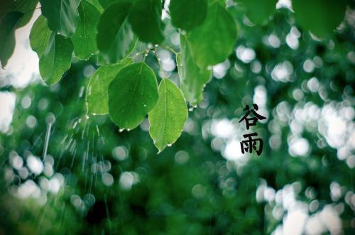 """网上买彩票可靠吗:谷雨节气多吃柔肝健脾食物远离""""春困"""""""