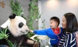 全球首只塑化大熊猫标本