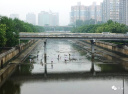 大雨后市民在护城河捞鱼
