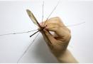 蚊子咬人看血型?其实它最喜欢叮这样的人.......