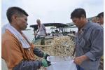 组图|洪泽湖毛刀鱼迎来丰收季 渔民抓紧捕捞、晾晒
