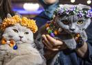 土耳其举行国际猫展