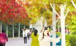 最美秋色已上线 在漯河同样有一处赏枫胜地