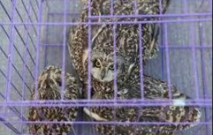 十部门联合打击野生动物违规交易、口罩等防护产品非法制售