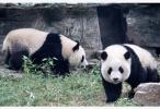 北京动物园3月23日开园 须提前1天以上预约购票